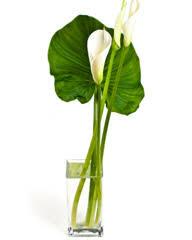 plante bureau plantes bureau