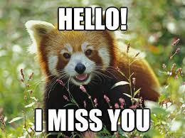 Panda Meme - hello i miss you curious red panda quickmeme