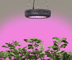 Grow Lights For Plants Grow Lights And Plant Lights For Indoor Lamps Plus