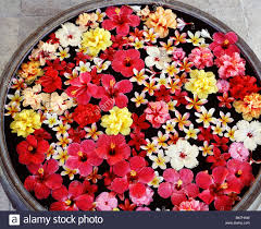 floating flowers pot with floating flowers stock photo 29056129 alamy