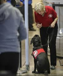 businesses u0027 skepticism of service dogs creates conflicts