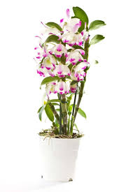 these plants can purify the air at home femina in