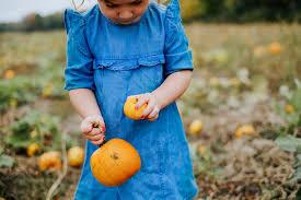 pumpkin patch maternity lizzy adam 1 emilie