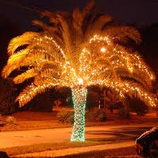 trees orange county lights decoration
