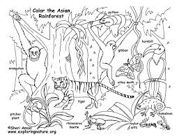 rainforest animals colouring pages funycoloring
