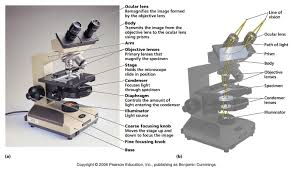 why is a light microscope called a compound microscope does the lens of a light microscope work