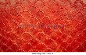 snake skin fashion stock photos u0026 snake skin fashion stock images