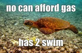 Turtle Memes - meme sea turtle wild free project