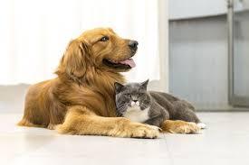 imagenes de animales y cosas se debe llamar cosas a los animales muchos están luchando por