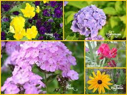 List Of Tropical Plants Names - 30 flower pictures and names list