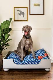 dreamy dog beds southern living