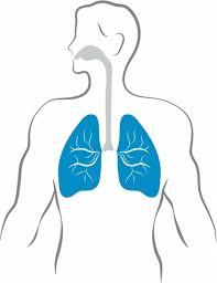 Cartoon Human Anatomy Cartoon Body Free Vector Download 14 360 Free Vector For