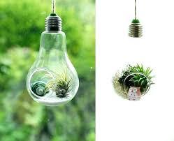 grow light bulbs lowes grow light bulbs lowes cantorum info