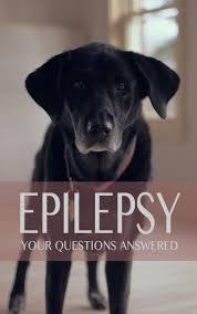 epilepsy in labradors faq