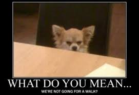 Pomeranian Meme - dog funny images archives page 5 of 9 what breed is it