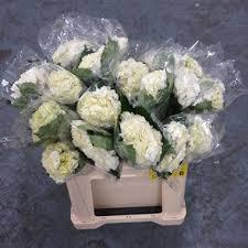 wholesale hydrangeas hydrangea ivory wholesale flowers uk wedding flowers