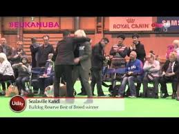 affenpinscher crufts 2014 45 best crufts 2014 images on pinterest products php and newspaper
