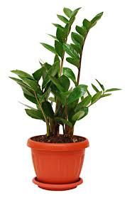 pflanzen für schlafzimmer zimmerpflanzen im schlafzimmer empfehlenswerte pflanzen