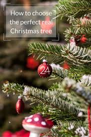 tips for choosing a real christmas tree growing family