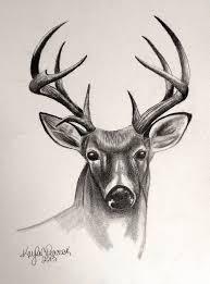 25 draw deer ideas drawing