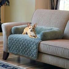 Leather Sofa And Dogs Pet Cover Leather Sofa Catosfera Net