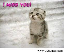 I Miss You Funny Meme - i miss you wallpaper for facebook us humor image 864515 by