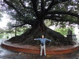 cool trees two big trees ru