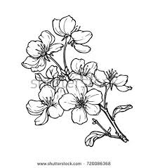 flowers drawing lineart on white backgrounds stock vector