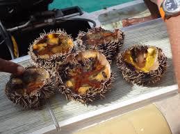 comment cuisiner les oursins dégustation d oursins sur le bateau l amistad ile maurice