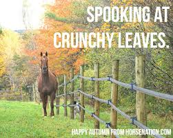 Autumn Memes - autumn is my favorite color a few autumn inspired equestrian
