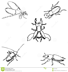 insects a sketch by hand pencil drawing stock vector image