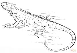 iguana coloring page free printable coloring pages