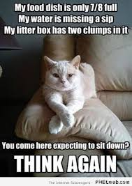 Kitty Cat Memes - funny cat pics when the wild kitty cats take control pmslweb