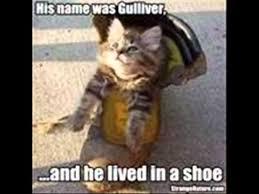 Stupid Animal Memes - funny stupid animals episode 2 youtube