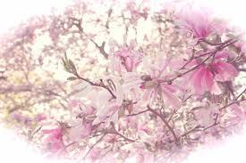 Cherry Blossom Facts by Pablo Gonzalez Gomez