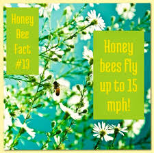 harvey s honey home facebook image may contain text and nature