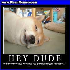 Memes Of 2014 - clean memes page 285 clean memes