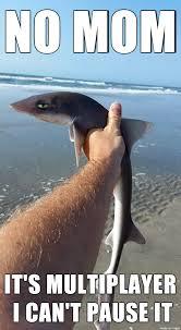 Shark Meme - introducing sick of your shit shark meme on imgur
