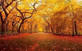 fall screensavers wallpaper