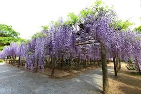 albero giardino foto gratis acacia fiore natura albero flora ramo foglia