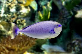tropical fish free stock photo public domain pictures