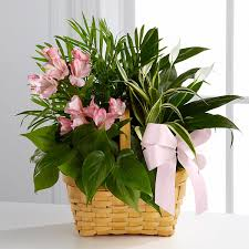 plant delivery indoor flower plants indoor plant delivery service by ftd