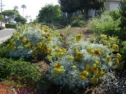 plants comprehensive southern california native landscaping