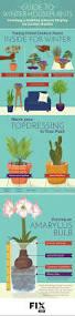 guide to winter houseplants fix com