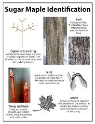 Backyard Sugaring 234 Best Maple Syrup Sugaring Images On Pinterest Maple Syrup