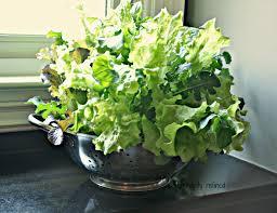 Kitchen Herb Pots by Kitchen Herb Garden Planter Detrit Us