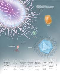 viruses reconsidered the scientist magazine