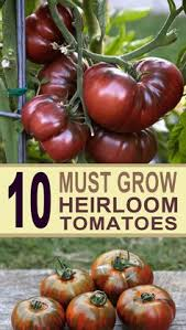 10 Tips For Growing Peppers by 10 Gardening Tips For The Best Tomatoes Gardens Vegetable