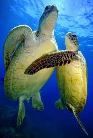 577 best under da sea images on pinterest ocean life under the