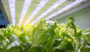 best grow lights for vegetables the best led grow light bar 3 top options best led grow lights info
